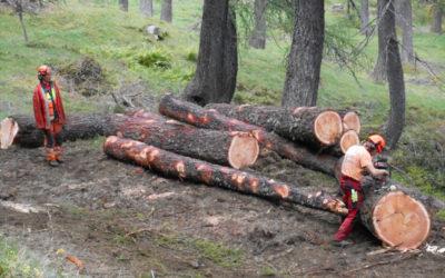 Interventi forestali in Val di Campo lariceto pascolato