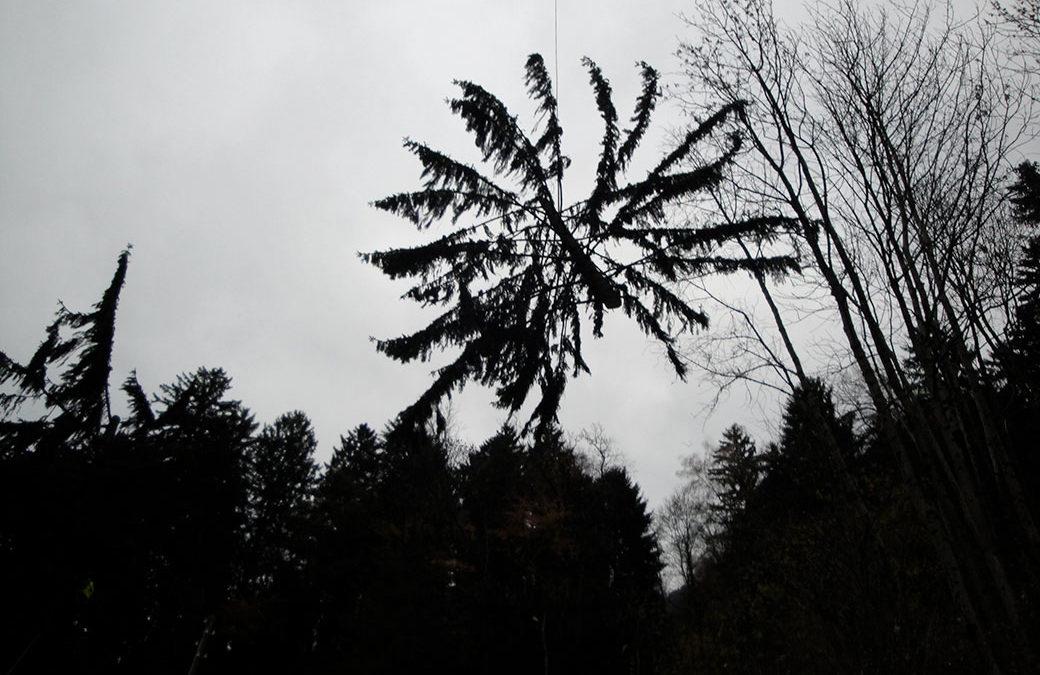 Interventi selvicolturali nel bosco di Santa Agata a Campo Blenio